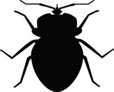 AUDIO: Dr. Margo Erme On Bed Bug Prevention, Awareness