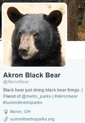 Akron Black Bear Twitter account