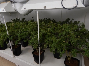 Summit Drug Unit Busts Alleged Pot Grow Operation